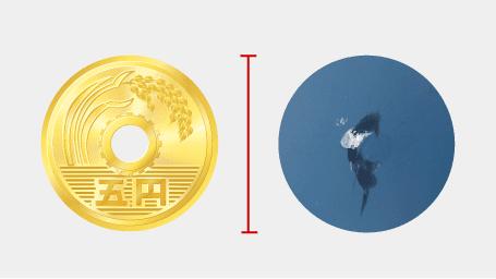 5円硬貨の大きさぐらいまでのキズならリペア(修理)できる可能性があります。